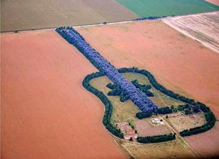 ギターの森